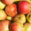 Many ripe apples — Stock Photo