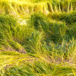 Saturated green and yellow grass - Stock Photo