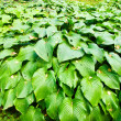 Plants with big leaves — Stock Photo