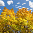 Autumn foliage and airplane - Stock Photo