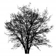 Tree silhouette — Photo