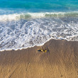 Stock Photo: Tranquil secoast with small waves