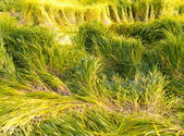 Saturated green and yellow grass — Stock Photo