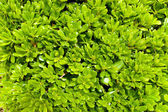 Saturated green leaves background — Stock Photo