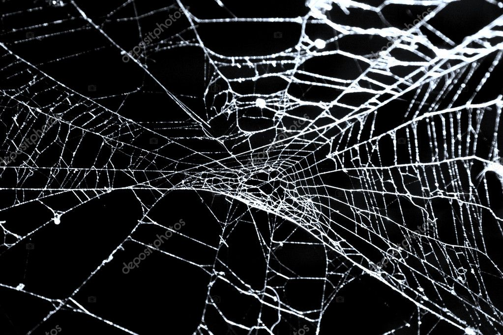Spider's web on black. Photo of real web isolated on black.  Stock Photo #1695709