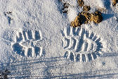 Sole footprint on a snow — Stock Photo