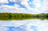 Tropical forest and big river — Stock Photo