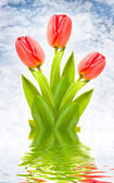 Three red tulips on idyllic background — Stock Photo