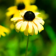 Tender yellow flower — Stock Photo