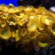 Small sea underwater plant - Stock Photo