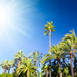 Tropical palms and bright sun — Stock Photo #1751961