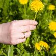 Woman hand with dandelion — Stock Photo