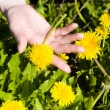 Young woman hand with dandelion — Stock Photo