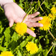 Young woman hand with dandelion — Stock Photo #1752173