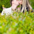 Young couple kissing in green bushes — Stock Photo