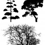 Три дерева силуэты на белом — Стоковое фото
