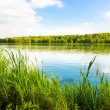 Stock Photo: Green bank of a lake