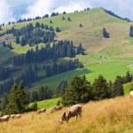 Alps landscape — Stock Photo