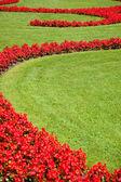 Gazon met bloemen — Stockfoto