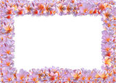 Abstract foto frame — Stock Photo
