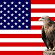 Eagle in-front of the american flag — Stock Photo