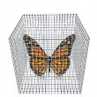 Butterfly in birdcage isolated on white — Zdjęcie stockowe #1883700