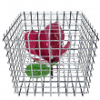 Red rose in birdcage — Stock Photo