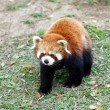 Stock Photo: Little golden panda