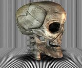 3D big realistic skull — Stock Photo