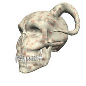 3D big realistic skull isolated on white — Stock Photo