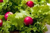 Radish and salad — Stock Photo