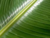 Wet Leaf — Stock Photo