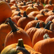 Pumpkins — Stock Photo #1409968