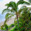 View on a beach and a courtyard — Foto de Stock