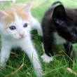 Black and white-red kittens — Stock Photo