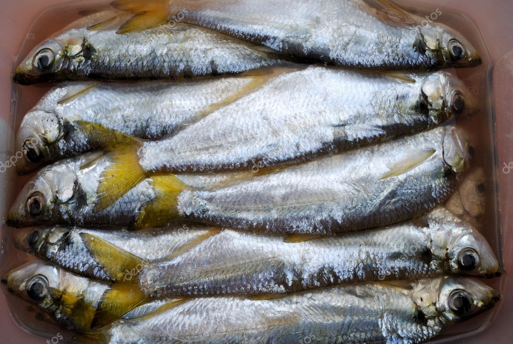 The salted fish-pelada in capacity with a brine — Stock Photo #1148240