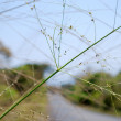 Stock Photo: Small stalk of grass