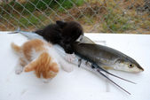 Kittens with fishes — Stock Photo