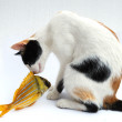 Stock Photo: Cat and goldfish
