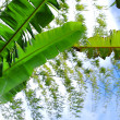 Stock Photo: Bamboo y banana
