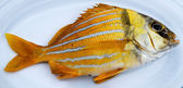 Gold fresh fish — Stock Photo