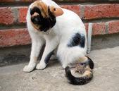 Mus och katt — Stockfoto