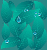 Drops on a leaves — Stock Vector