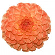 Stock Photo: Beautiful orange flower on white backgro