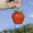 Red freshness strawberry — Stock Photo