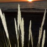 Beautiful sunset on Baltic sea — Stock Photo