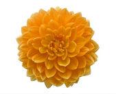 Beautiful orange flower — Stock Photo