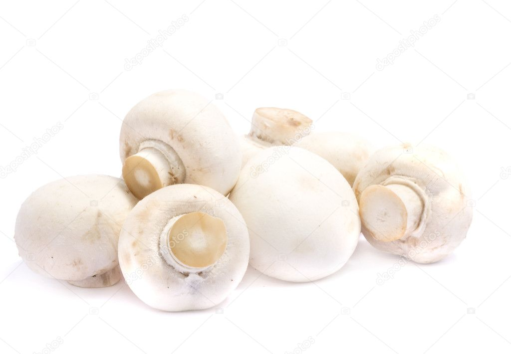 White mushrooms over white — Stock Photo #1150143