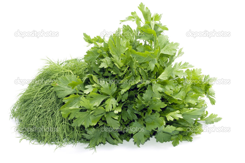 Dill and celery over white  Stock Photo #1151218