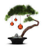 Chinese New Year pine tree — Stock Photo